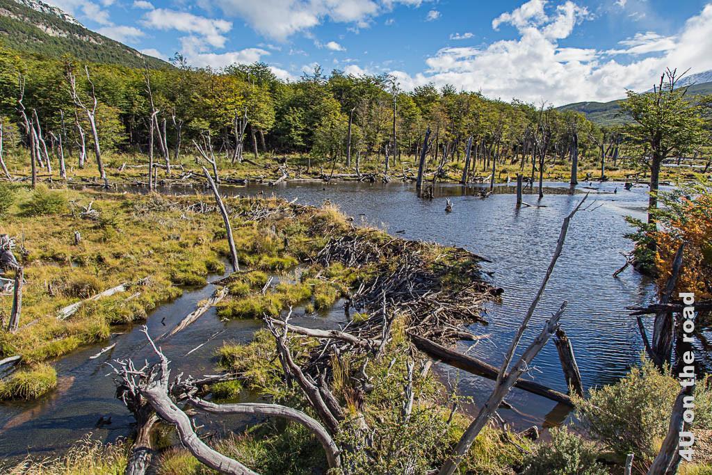 Bild Überschwemmung durch Biberstaudämme im Tierra del Fuego Nationalpark