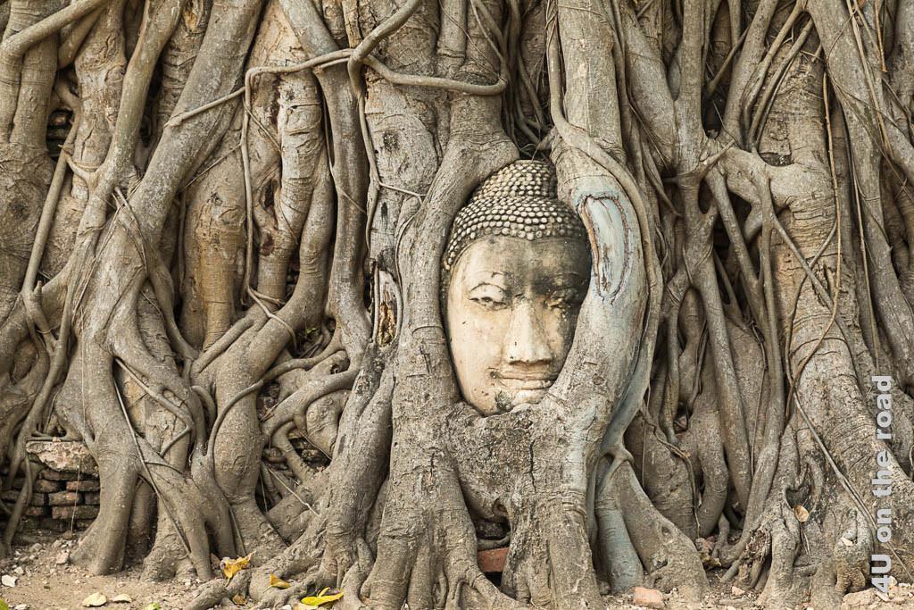 Bild Buddha von Baumwurzeln umwachsen - Wat Mahathat, Ayutthaya