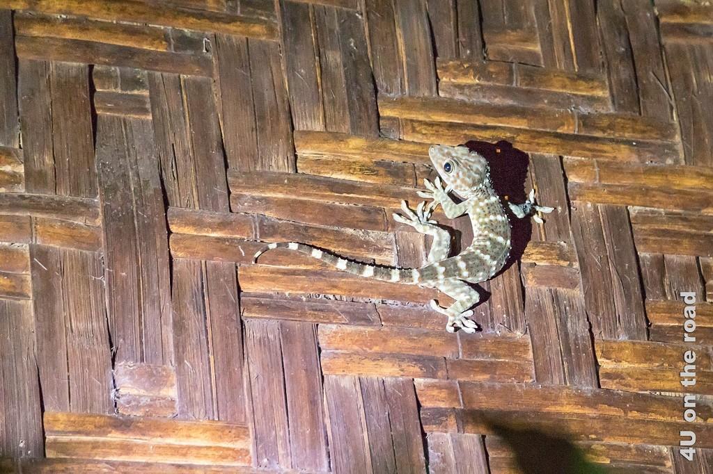 Bild Ein nächtlicher Besucher. Das Bild zeigt eine gestreiffte Gekoart.