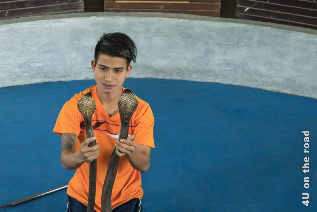 Bild Kobras – die Zeichnungen am Kopf sind verschieden - Ao Nang Schlangenfarm, die Kobras befinden sich in der Hand des Schlangenbändigers