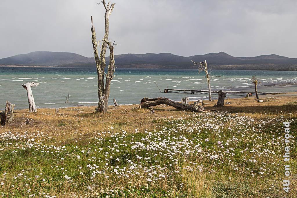 Bild Impressionen Lago Yehuin, das Bild zeigte eine üppig blühende Wiese, Baumstämme toter Bäume, den See mit Wellengang, im Hintergrund Berge