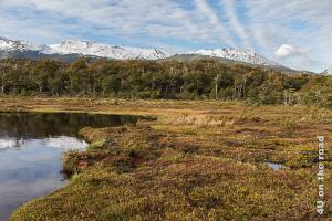 Bild Moor mit See und schneebedeckten Bergen im Hintergrund im Tierra del Fuego Nationalpark