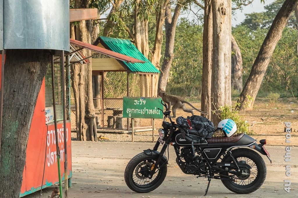 Bild Affe klettert über ein Motorrad auf das Haus