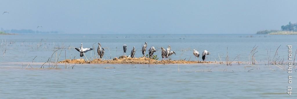 Bild Vögel auf kleiner Lehminsel im Bueng Boraphet