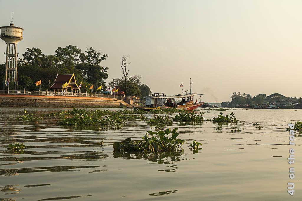 Bild Wasserpflanzen trotz hohem Verkehrsaufkommen - Ayutthaya