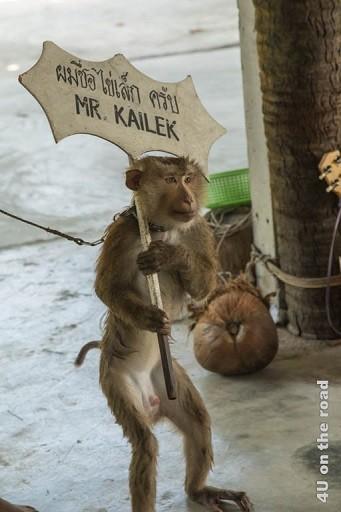 Bild Der Affe Mr. Kailek - Ao Nang Schlangenfarm, Der Affe trägt ein Schild mit seinem Namen