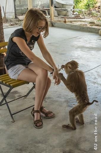 Bild Der Affe beim Knotenlösen - Ao Nang Schlangenfarm, der Affe knotet einen Mehrfachknoten bei der gefesselten Tochter auf