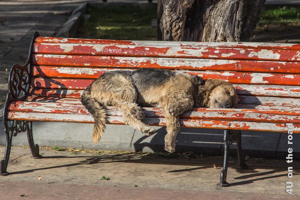 Bild Schlafender Hund auf einer Parkbank im Stadtpark in Punta Arenas