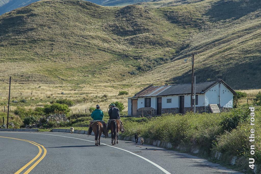 Bild Auf dem Weg zum Pass Abra El Infiernillo. Vor uns reiten zwei Einheimische, begleitet von 3 Hunden auf der Strasse. Die umgebende Berglandschaft ist im Umfeld der Strasse sanft hügelig mit grünem und braunem Weidegras