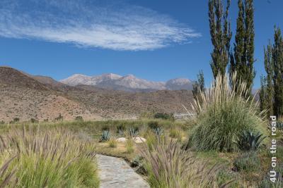 Bild Aussicht beim Gang zum Parkplatz des Klosterhotels La Merced del Alto ausserhalb von Cachi über grosse Grasbüschel im Park, die kargen Hügel dahinter bis zu den weiter entfernt liegenden Bergen.