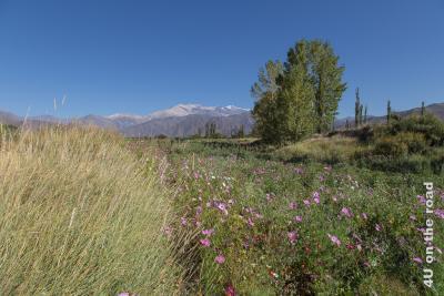 Bild Blumen und Berge. Im Vordergrund Gräser und pinkfarbene Wildblumen. Dahinter vereinzelte Baumgruppen. Ganz im Hintergrund hohe und breit ausgedehnte Berge.