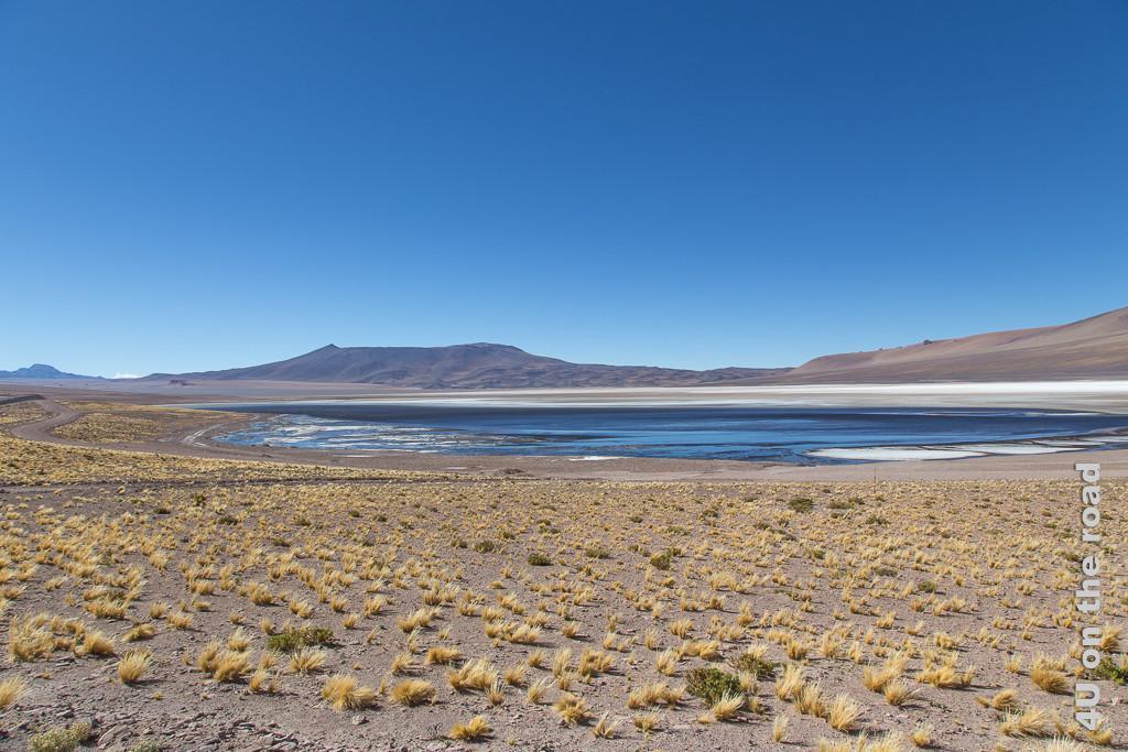 Bild Entlang des Weges nach San Pedro de Atacama - blaues Wasser mit weisser Salzkruste gerahmt von bräunlichen Hügeln, im Vordergrund einzelne gelbe Grasbüschel