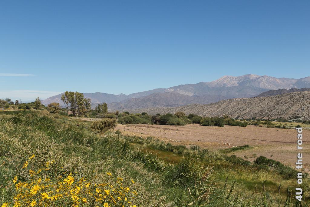 Bild Hinter Cachi auf dem Weg nach Salta. Gelbe Blumen im Vodergrund, grüne Vegetation entlang der Strasse und des Flusslaufs, sonst karge Landschaft mit gestaffelten Bergketten.