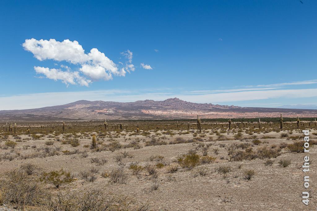 Bild Hochebene mit Kakteen zeigt eine breite Hochebebe mit vereinzelten Kakteen darin. Im Hintergrund beenden höhere Berge die Hochebene. Blauer Himmel mit weisser Wolke stellt den Farbkontrast zu den bräunlich bis rötlichen Erdfarben.