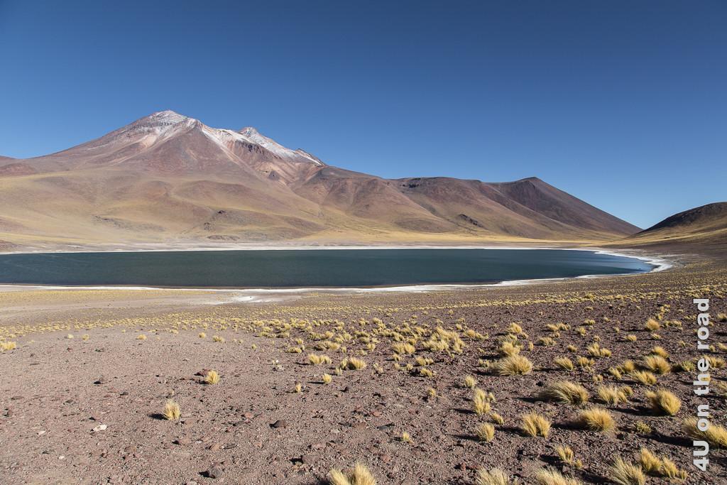 Bild Laguna Miniques. Vereinzelte Grasbüschel, See mit weissen Salzrändern und der Vulkan im Hintergrund.