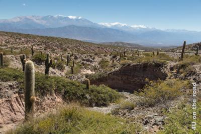 Bild von Los Cordones, den Kakteen-bestandenen sonst kargen Berghängen ausserhalb Cachis an der Strasse nach Salta. Im Hintergrund eine Bergkette mit Schneemützen.