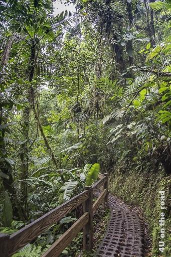 Bild der Weg durch den Dschungel, Hanging Bridges Park, zeigt einen holprigen Weg aus Rasensteinen, gesäumt von einem Holzgeländer im Dschungel