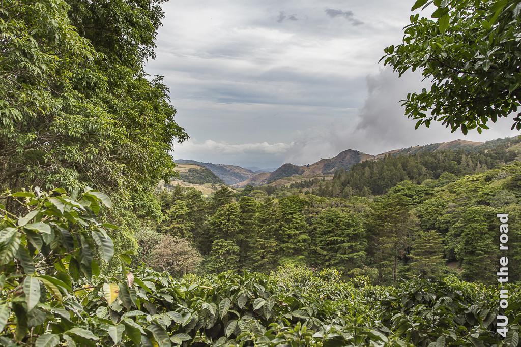 Bild Ausblick von der Kaffeeplantage zeigt im Vordergrund Kaffeepflanzen, dann höhe Bäume und Hügel vor Wolken.