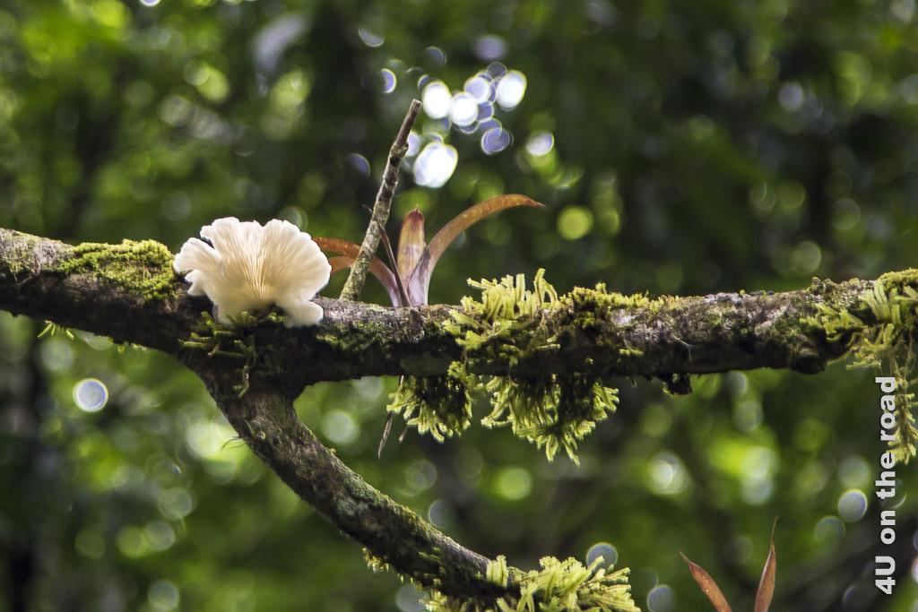 Bild Baumbewuchs, Hanging Bridges Park, zeigt einen Ast mit Moos, Bromelie und Pilz