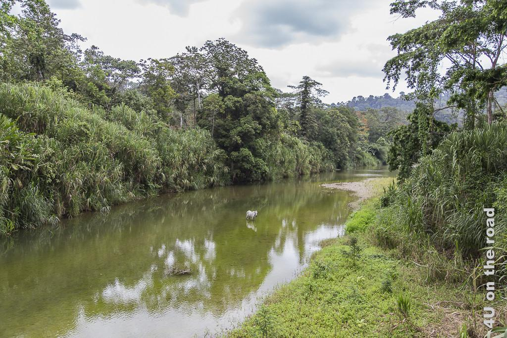Bild Blick von der Brücke zeigt den Fluss mit einem weissen Pferd und dem recht und links mit Bäumen und Schilf bewachsenen Uferrand.