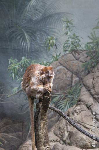 Bild Nachdenklicher Affe im Bronx Zoo, zeigt einen auf einem abgesägten Baumstamm sitzenden Affen mit langem Schwanz in Denkerpose.