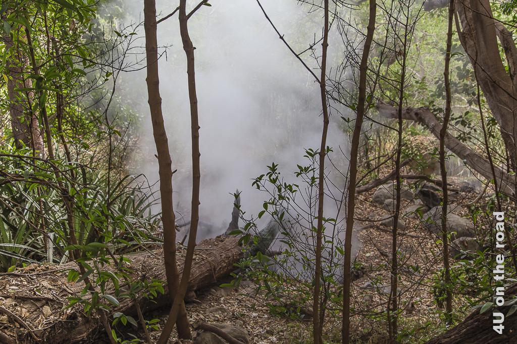 Bild Dampf im Dschungel, Rincon de la Vieja Nationalpark, zeigt einen liegenden Baumstamm im Dschungel. Dort, wo mal seine Wurzeln gewesen sind, dampft es aus dem Loch.