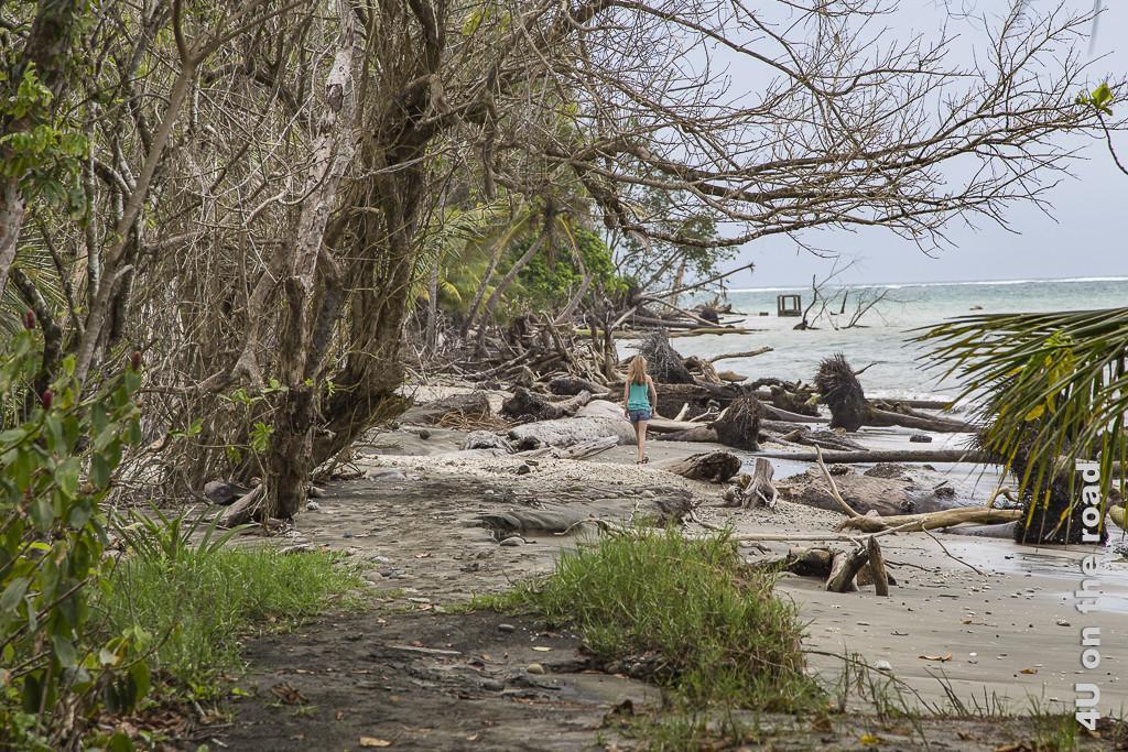 Bild Das Meer erobert den Urwald - Cahuita Nationalpark, zeigt einen schmalen Strandabschnitt mit umgefallenen Palmen und Bäumen