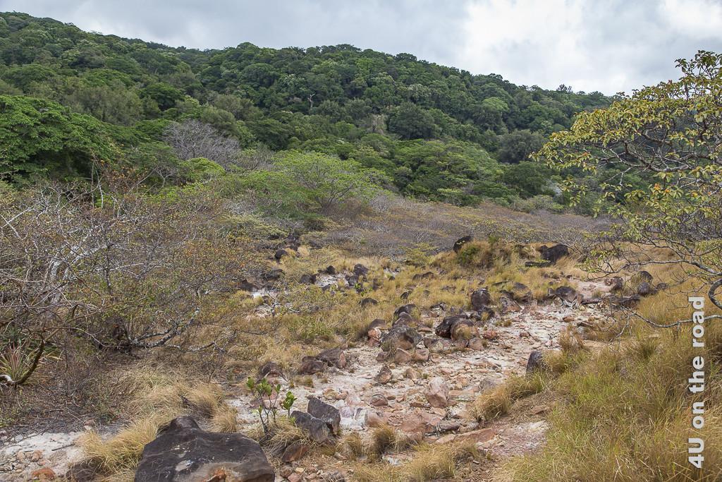Bild Der Weg über die offene Ebene im Rincon de la Vieja Nationalpark zeigt im Hintergrund grünen Regenwald, der in eine Fläche mit trochenem Gras und steinen übergeht.