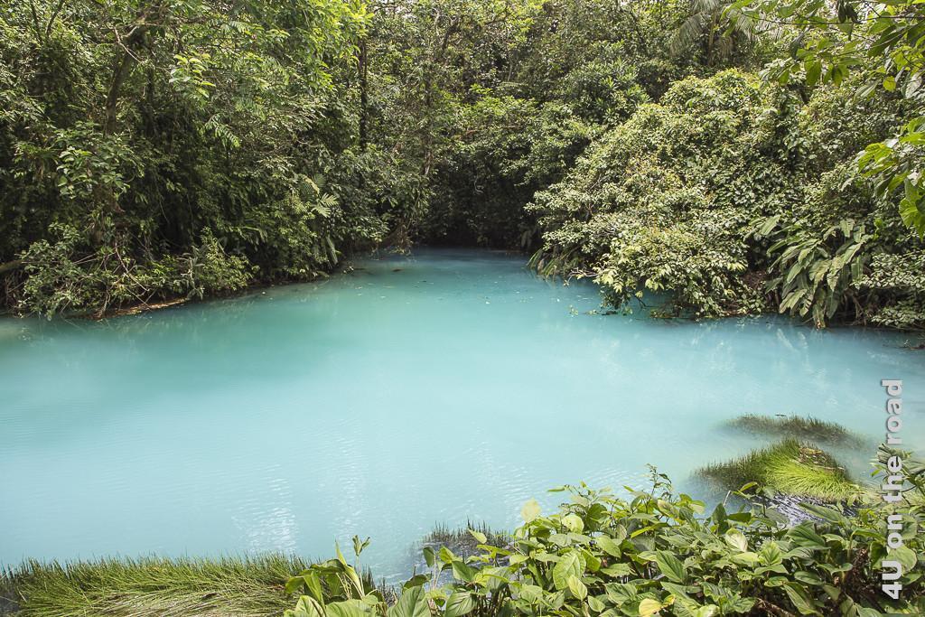 Bild Die blaue Lagune im Vulkan Tenorio Nationalpark zeigt milchig blaues Wasser umgeben von Grün