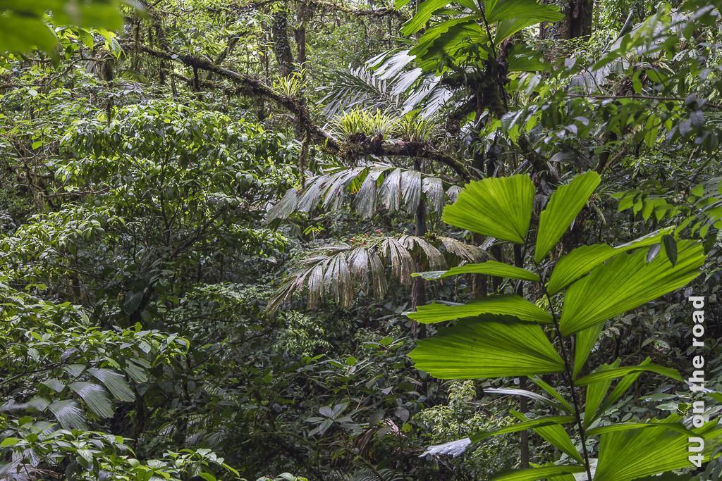 Bild Dschungel, Hanging Bridges Park zeigt dicht gewachsene Blätter unterschiedlicher Form und Farbe und bewachsene Äste