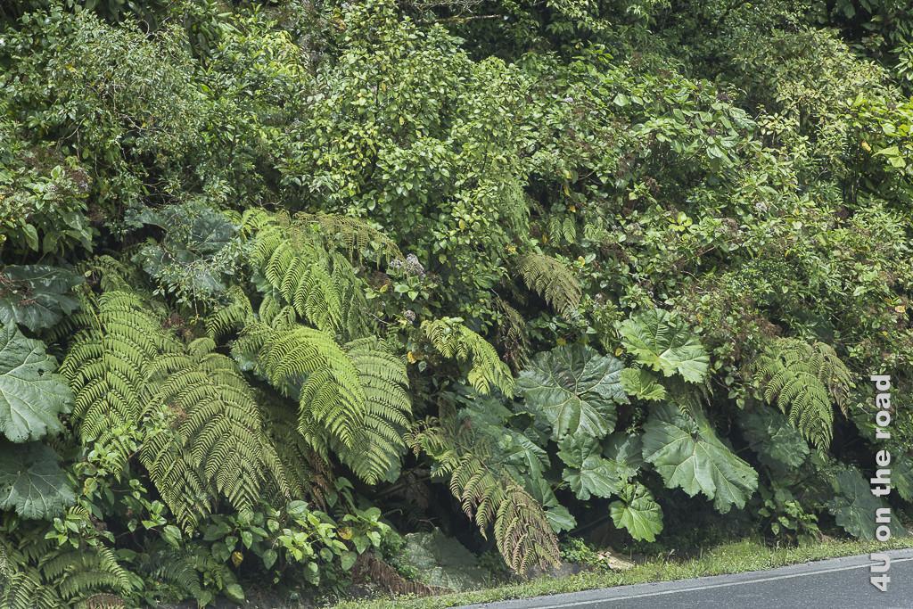 Vielfältige Blätter entlang der Strasse nach Puerto Limón