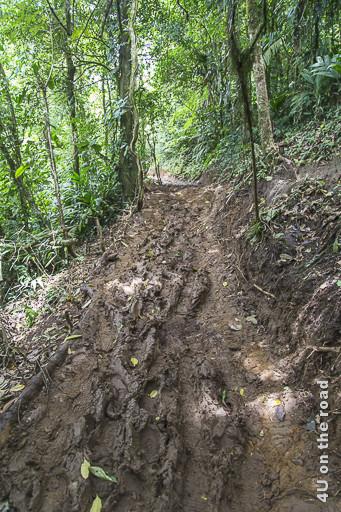 Bild Weg durch den Matsch, Vulkan Tenorio Nationalpark zeigt Weg mit tiefen Spuren im Morast durch den Dschungel