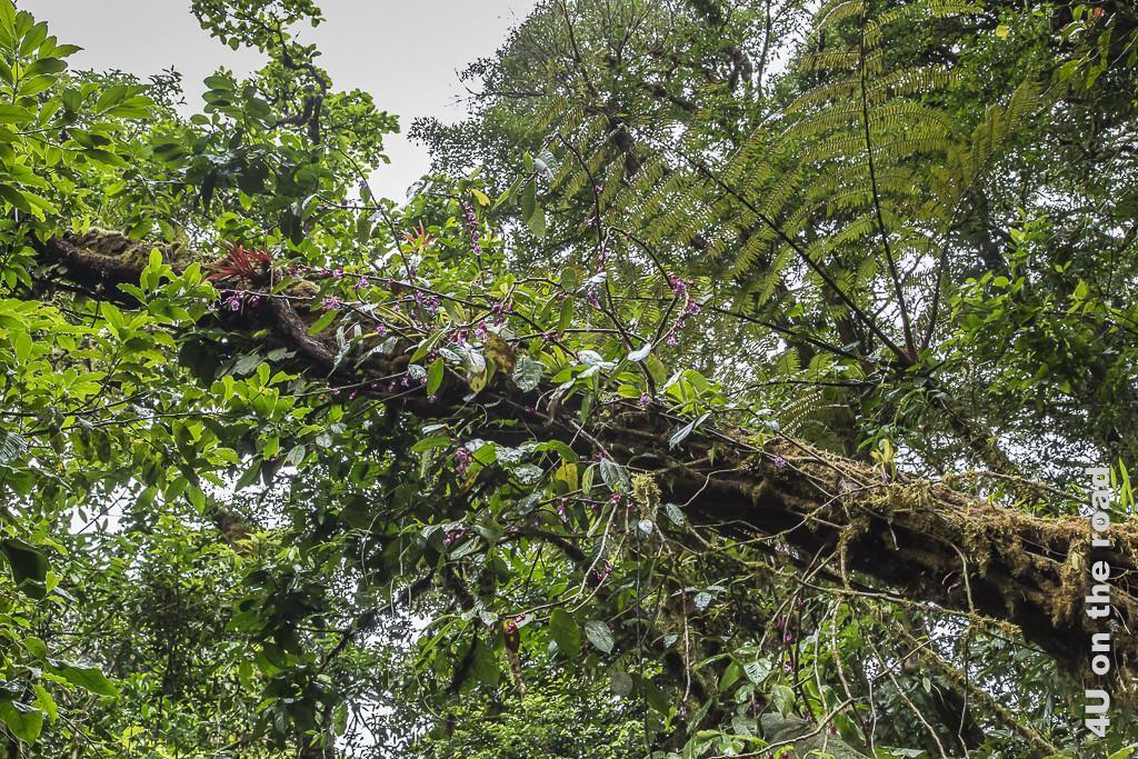 Bild Pflanzenbewuchs auf Baumstamm zeigt auf einem schiefen Stamm allerlei Plfalnzen und Moose