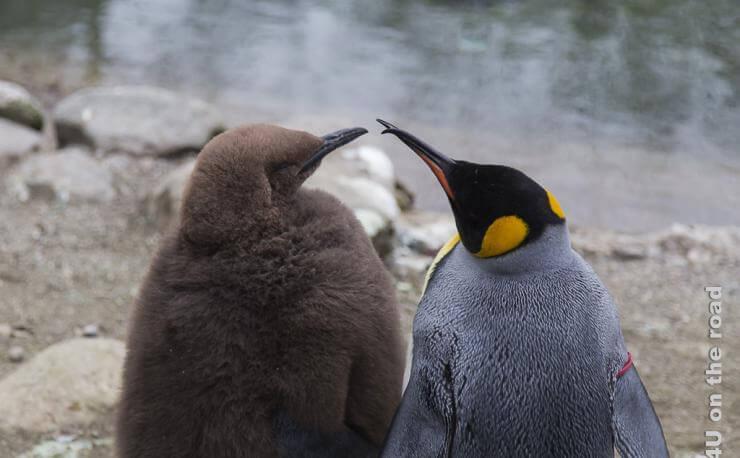 Planung einer Reiseroute, zeigt zwei sich scheinbar unterhaltende Pinguine mit Blick aufs Wasser