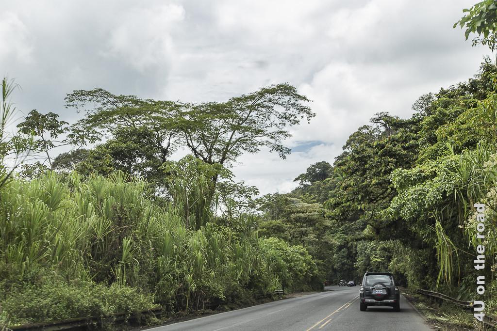 Bild Stop und Go auf dem Weg in die Karibik zeigt den Pflanzenbewuchs, hohe Bäume und Palmen, rechts und links der Strasse.