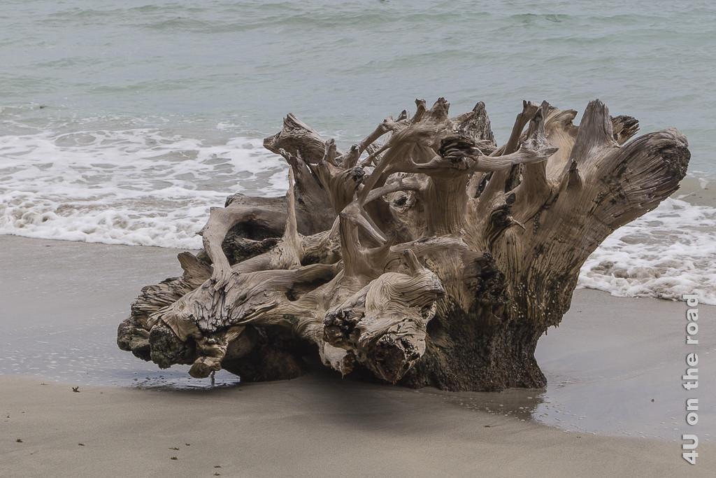 Bild Prachtvolle Wurzel am Strand - Cahuita Nationalpark