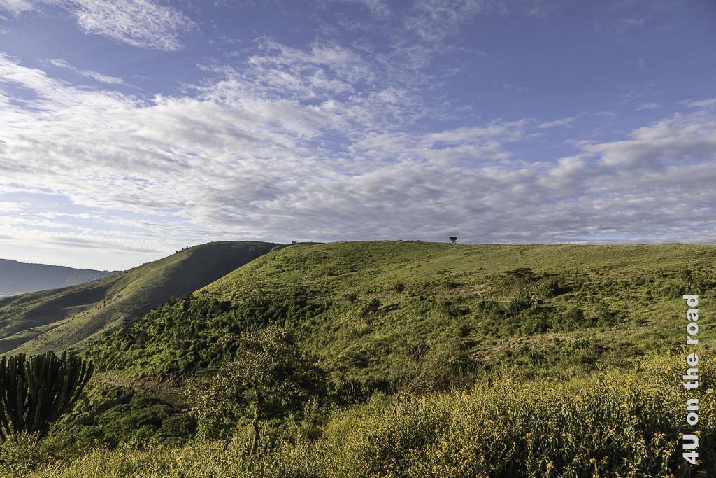Bild Einfahrt in den Ngorongoro Krater zeigt den Bewuchs am Kraterrand. Ein grosses Kaktus, blühende Blumenbüsche, kleine Bäume und grünes Gras.
