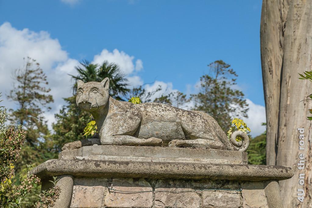 Bild Cheetah Skulptur, Mount Stewart zeigt einen Geparden liegend mit eingerolltem Schwanz. Die Schnauze ist beschädigt.