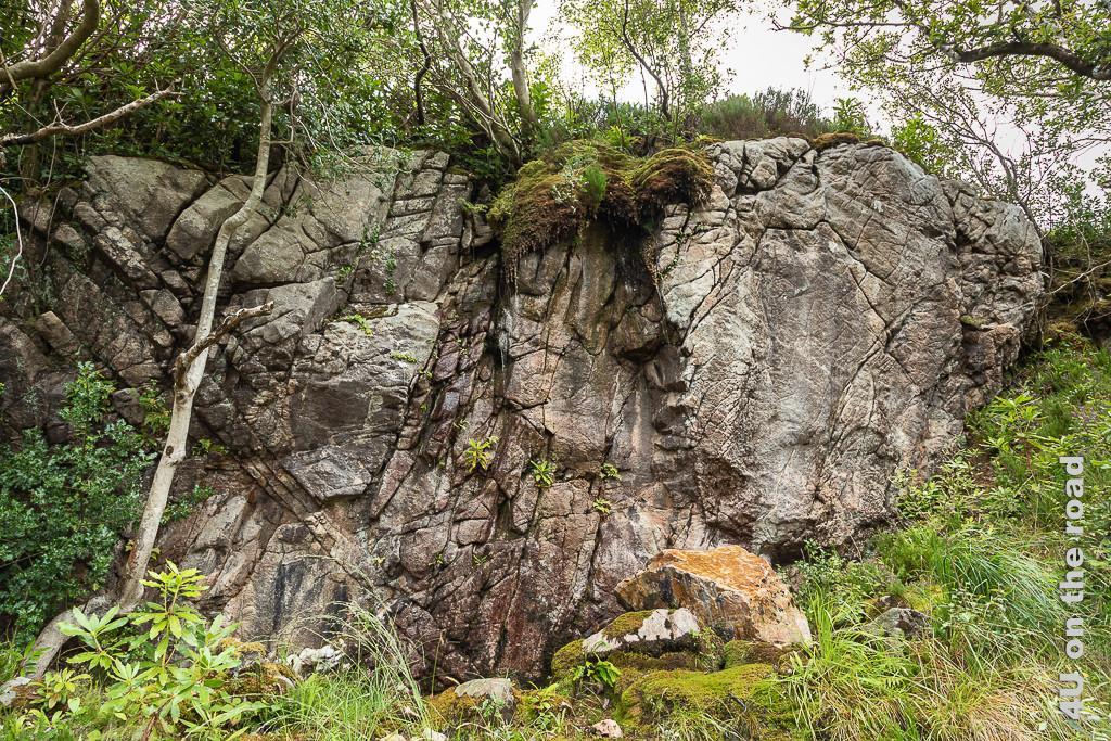 Bild Glenveagh NP - Felsen entlang des Weges zeigt grossen zerklüfteten Felsen mit tropfendem Moosüberhang und viele kleinere moosbewachsene Felsen.