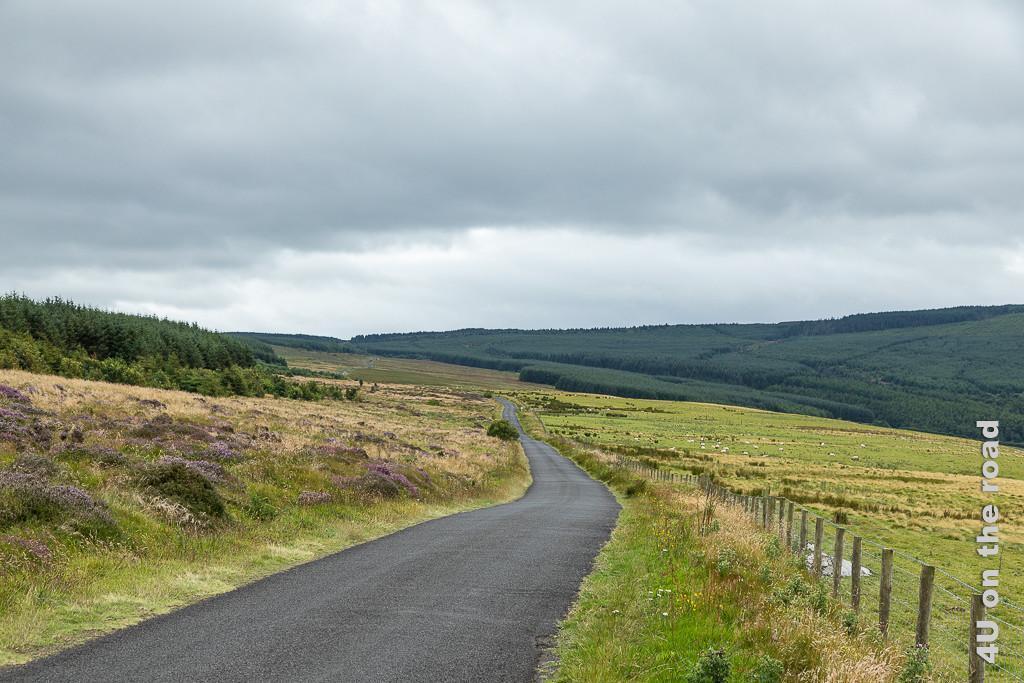 Das Bild Bishops Road zeigt die ansteigende Strasse inmitten von Weiden. Im Hintergrund erhebt sich dunkel der Wald. die rechte Zeit ist von einem Zaun begrenzt.