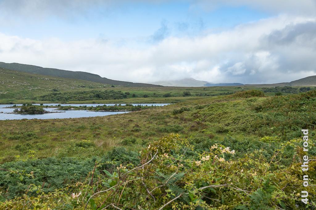 Bild Glenveagh NP - Blick zurück zeigt den See mit seinen Inseln, am Ufer ein Dickicht aus Farn, verschiedenen Gräsern, Geisblatt. Im Hintergrund schimmert ein Berg durch die Wolken.