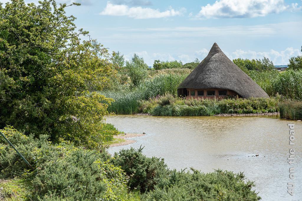 Bild Vogelbeobachtungshütte - Castle Espie am Strangeford Lough zeigt eine Schilfgedeckte Rundhütte, die sich perfekt in die Landschaft anpasst. Im Vordergrund Wasser und Büsche, rund um die Hütte unterschiedlich hohes Schilf.