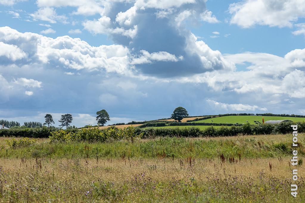 Bild Kurz vor dem Regen, Castle Espie zeigt im Vordergrund hohes trockenes Gras mit Diesteln versetzt, daran schliesst sich ein grüner Streifen und eine grüne Hecke an. Auf dem Hügel sind Weiden und Felder und vereinzelte Bäume zu sehen. Über der Szenerie türmt sich eine Gewitterwolke.
