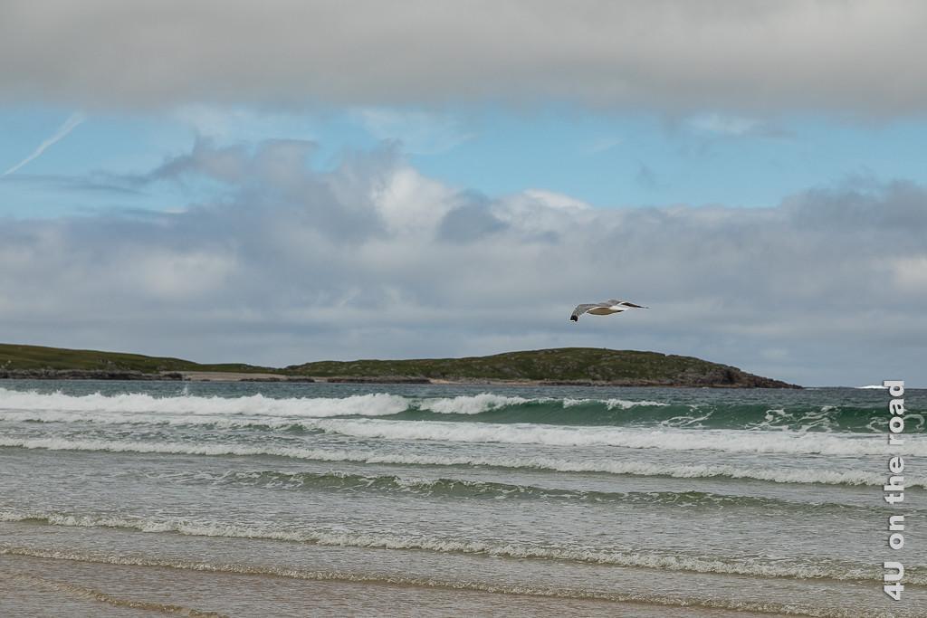 Bild Ballyhiernan Bay Wellen mit Möve, Fanad Peninsula zeigt sieben aufeinanderfolgende Wellen von einer Möve überflogen.