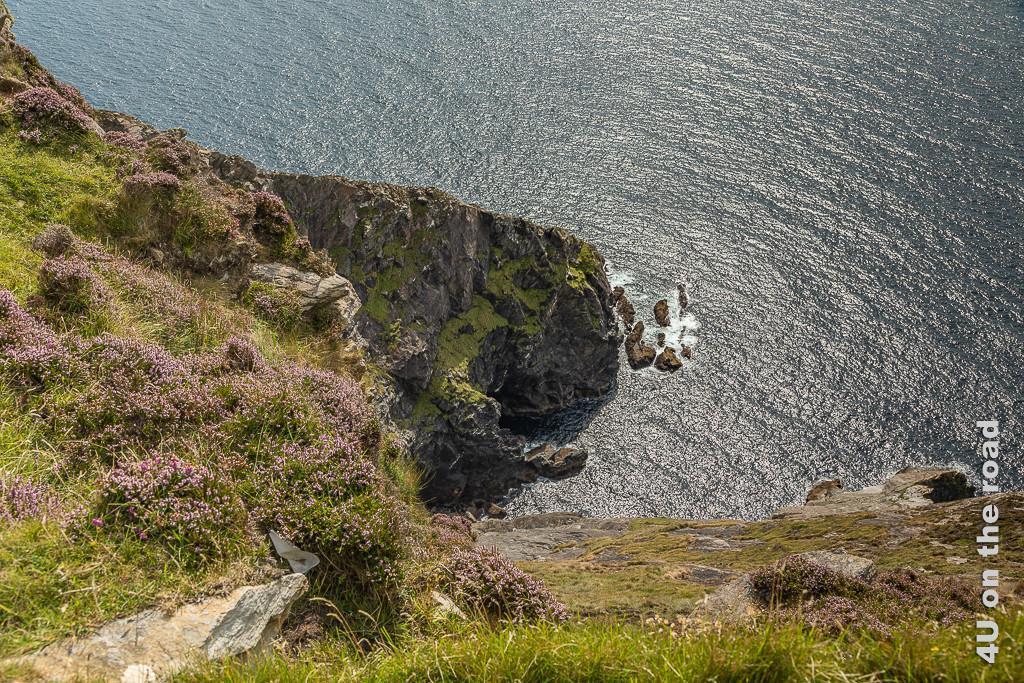 Bild Die Klippen fallen bis zu 600 m ab zum Meer - Slieve League zeigt einen Einschnitt und die steil abfallende Küste. Oben blüht Heidekraut.
