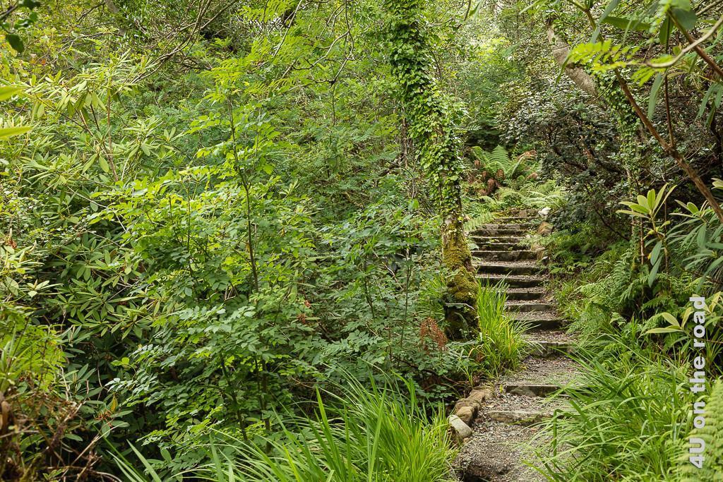 Bild Glenveagh NP - Verschlungene Wege durch den Park zeigt eine sich windende Treppe durch den grünen Dschungel.