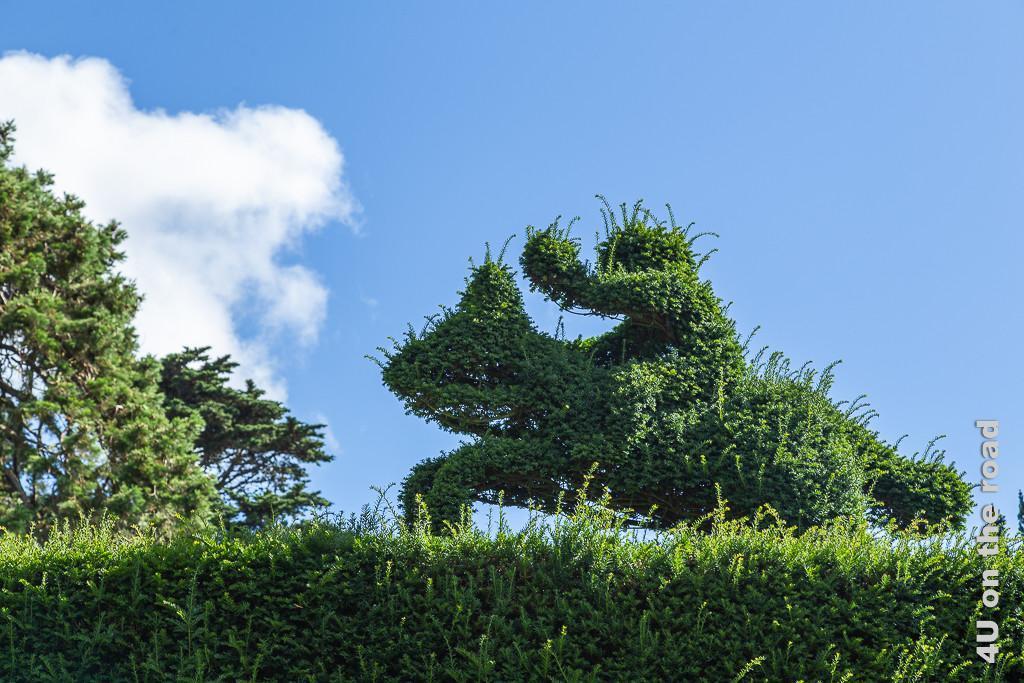 Bild Heckenreiter im Kleeblattgarten, Mount Stewart zeigt eine Eibenhecke auf der ein Reiter auf einem hundeähnlichen Tier sitzt. Diese Form ist aus der gleichen Hecke geschnitten.