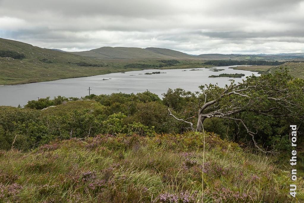 Bild Glenveagh NP - Blick vom Aussichtspunkt zeigt im Vordergrund einen fast 90° gebogenen Baum, einen grossen Teil des Sees mit seinen Inseln und die dahinterhliegende Hügelkette.