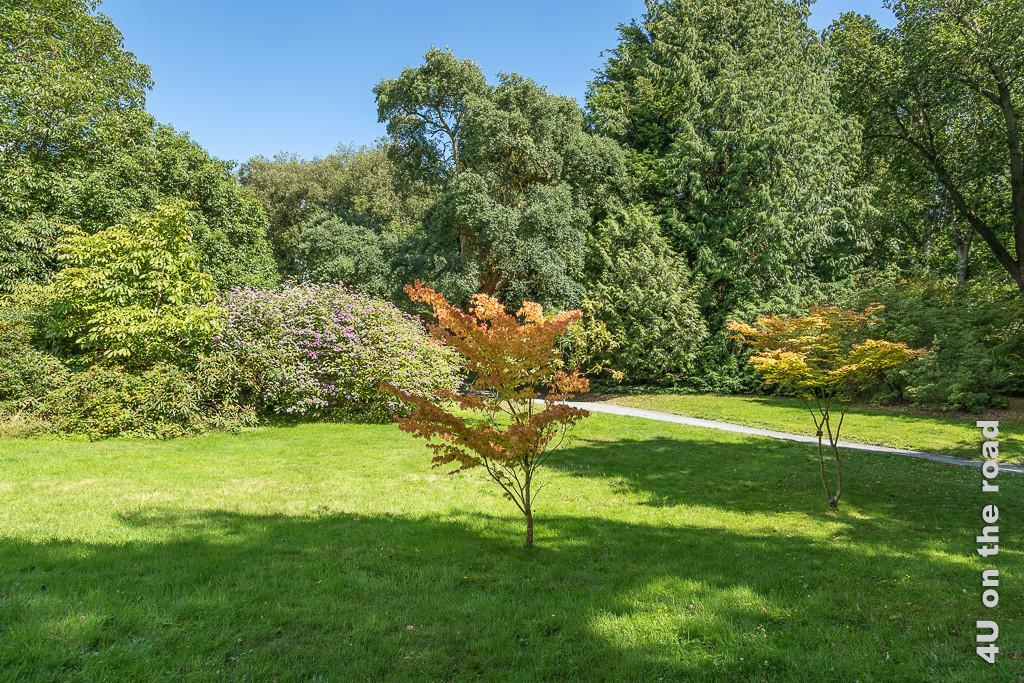 Bild Farbkontrast im Park, Mount Stewart zeigt zwei kleine Ahornbäume mit fast orangefarbenen Blätter, dahinter gibt es einen grossen Busch mit lila Blüten. Dahinter türmen sich unterschiedliche Bäume mit Blättern von hellgrün bis dunkelgrün auf.