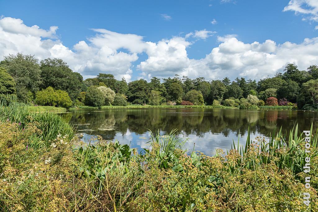 Bild See, Mount Stewart zeigt im Vordergrund die Ufervegetation mit Schilf, Blüten und verschieden geformten Blättern. Im Hintergrundsieht man schön geformte Bäume mit unterschiedlicher Laubfarbe.